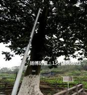 高性能復合材料古樹專用避雷針生產定制加工