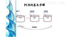 牛諾如病毒PCR檢測試劑盒