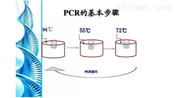 核酸检测PCR试剂盒