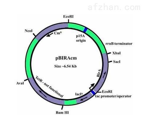 pHyVec4